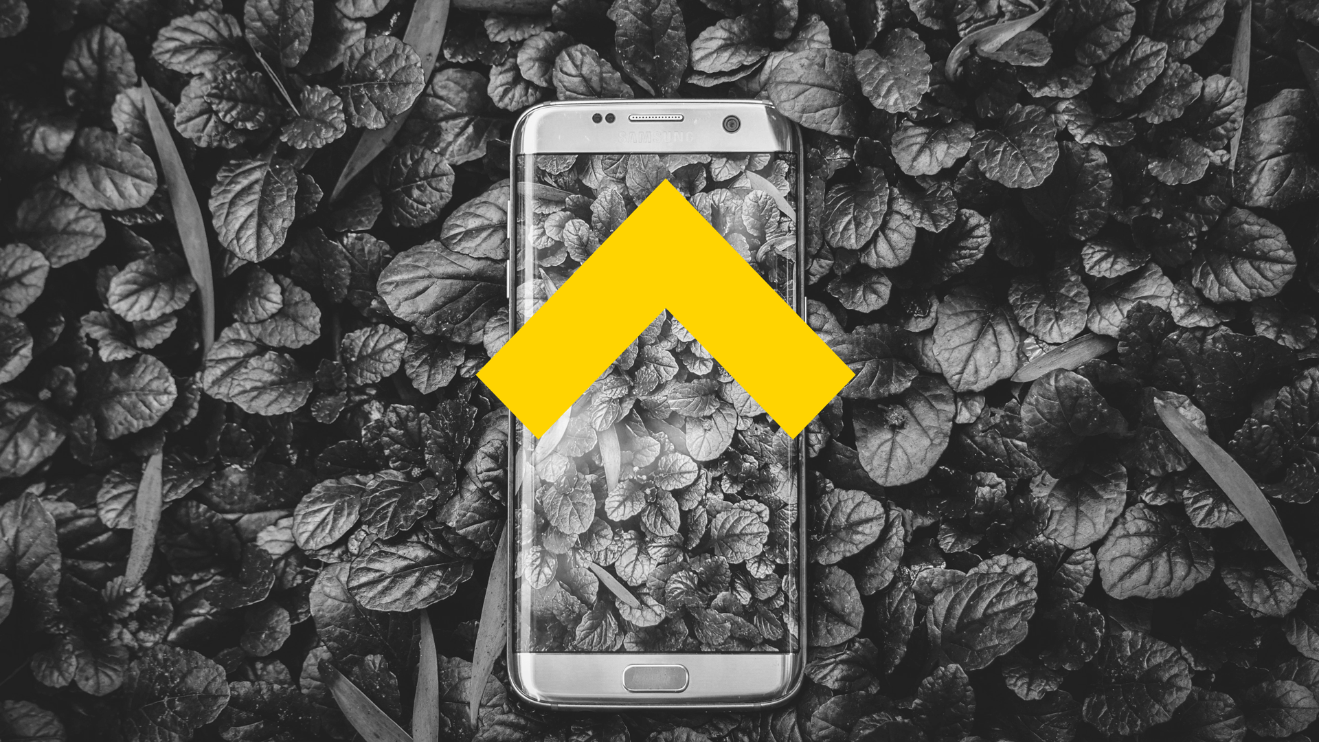 Smartphone-plant-blog-article-cover